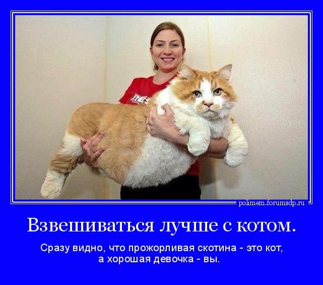 Кот это скотина